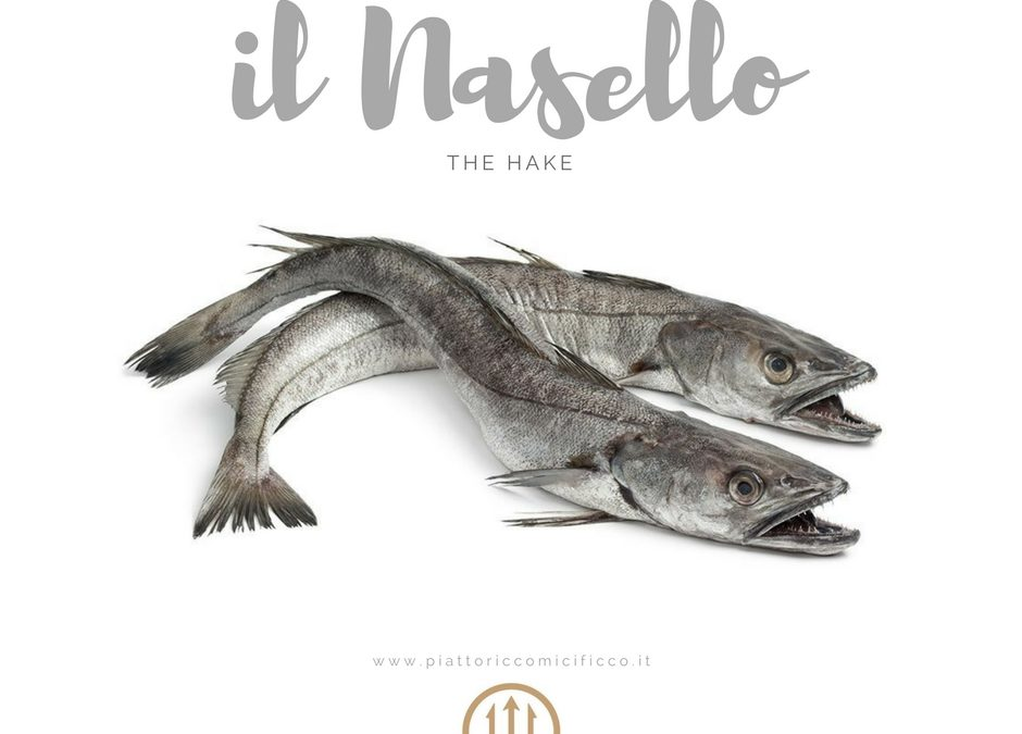 Player of the Week: il Nasello