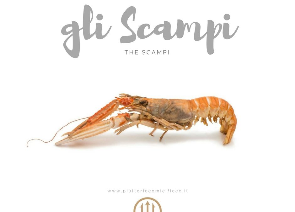 Player of the Week: gli Scampi